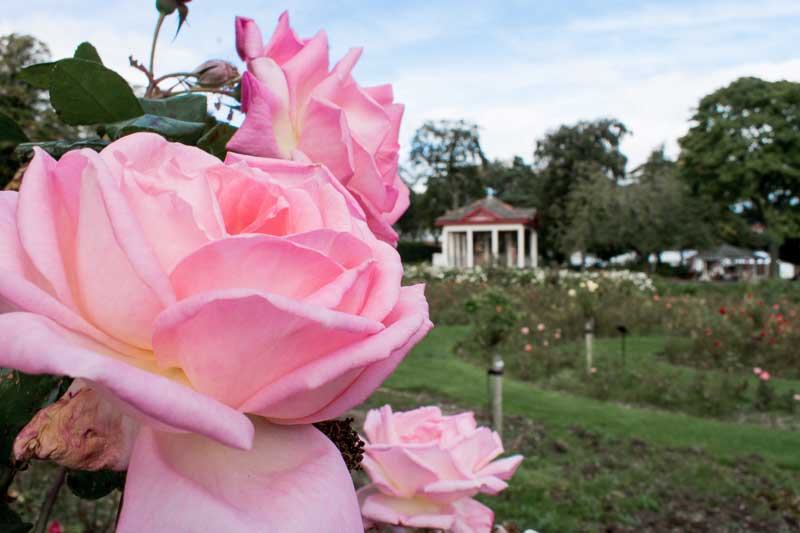 Visit the Botanic Gardens during your 48 hours in Belfast
