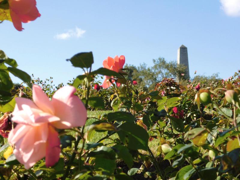 The Wellington Monument, Phoenix Park